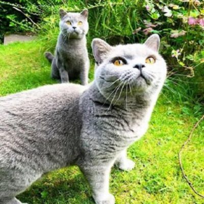 Kitty Angels Premier Cat Sitting Service Sheffield