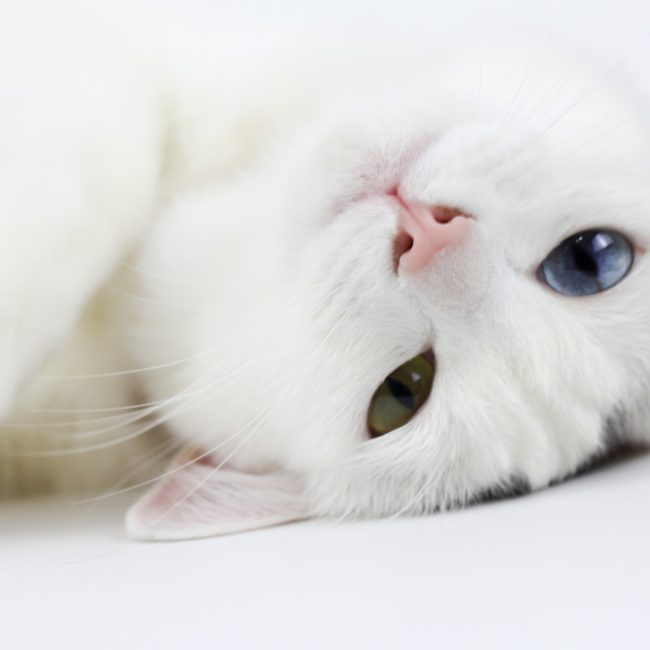 Kitty Angels Premier Cat Sitting Service Pricing