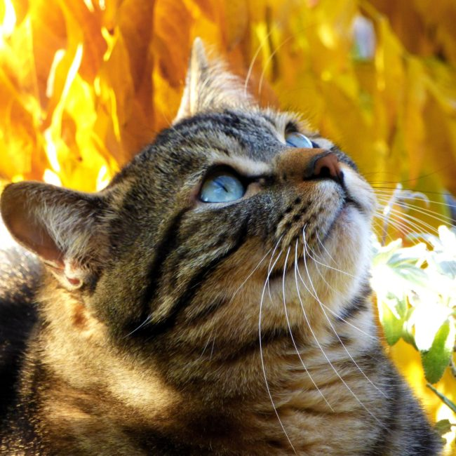 cat-1743958_1920