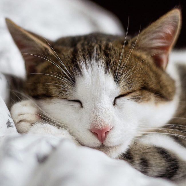 cat-2591623_960_720