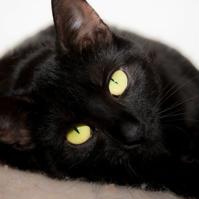 cat-316477_1280