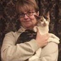 Kitty Angels Premier Cat Sitting Service Birmingham
