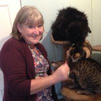 Kitty Angels Cat Sitting Service Telford - Carol