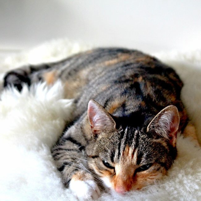 Kitty Angels Premier Cat Sitting Service Kidderminster