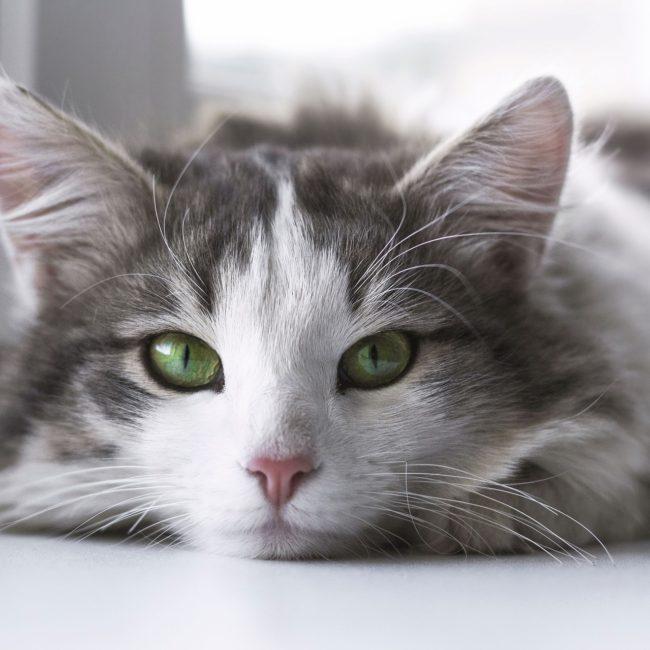 cat-2571971_1920
