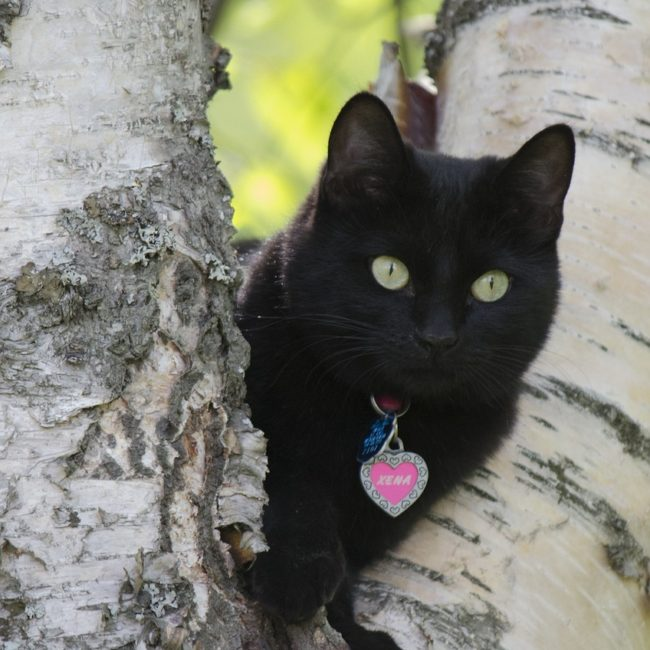 cat-989113_1280