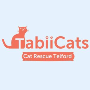 Kitty Angels Premier Cat Sitting Service Telford Tabii Cats Rescue