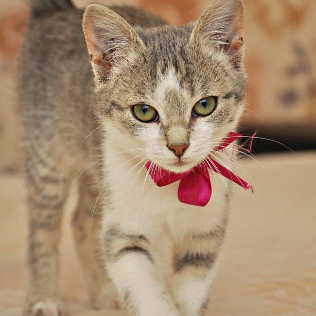 cat-1168845_1920