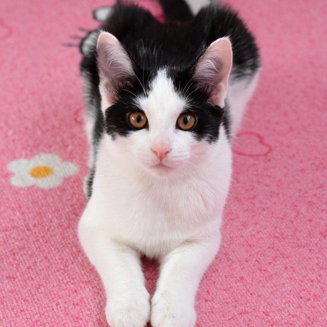 cat-1598121_1920