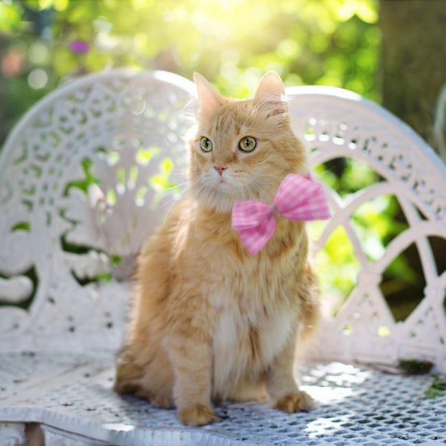 cat-2358830_1920