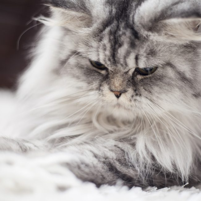 cat-2579989_1920