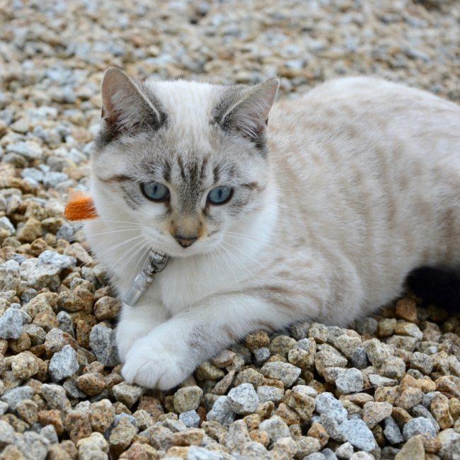 cat-2822869_1920