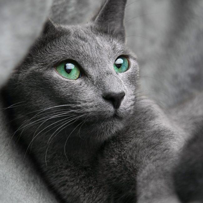 cat-1435590_1920