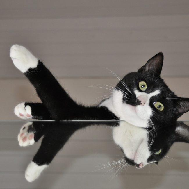 cat-566648_1920
