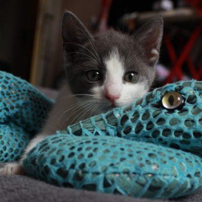 kitten-641041_1920
