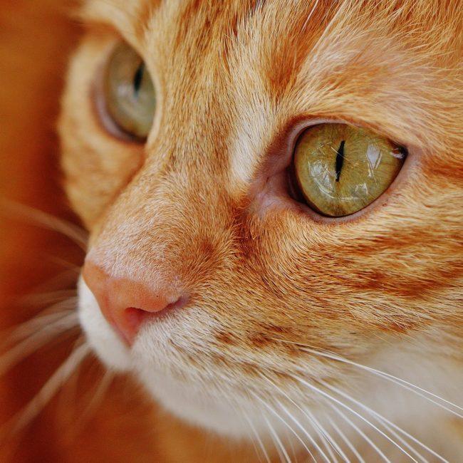 cat-1652822_1920