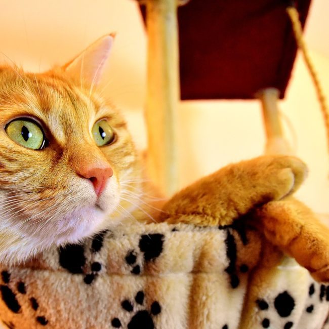 cat-3418484_1920