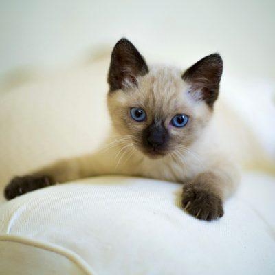 cute-3252251_1920