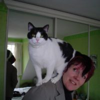 Gwen - Cat Sitter Kitty Angels Coventry