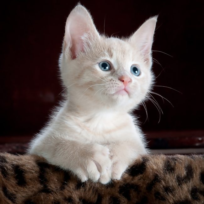 Kitty Angels Professional Cat Sitters Kitty Angels Coventry
