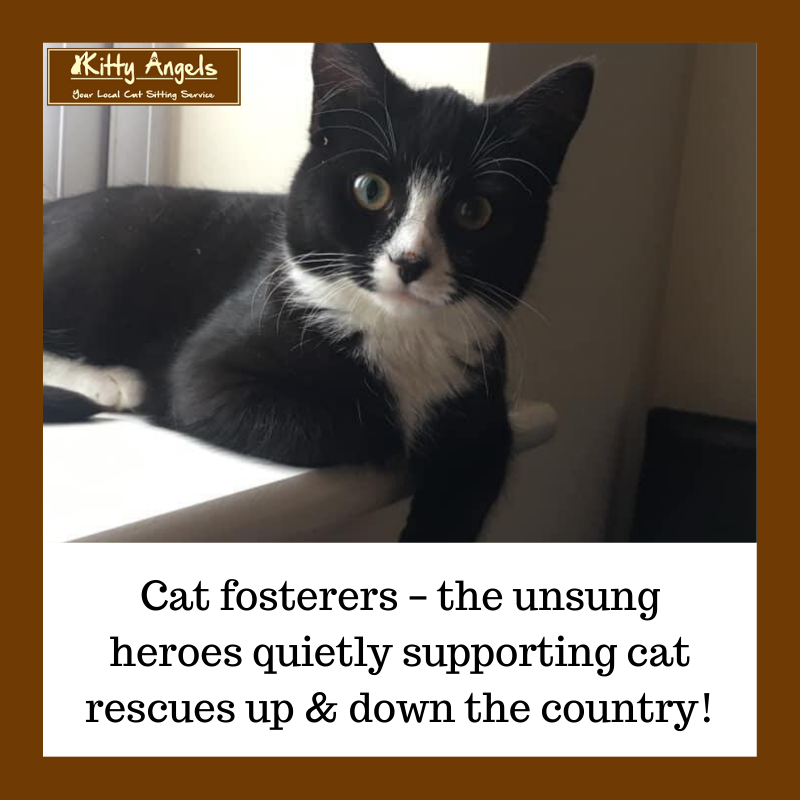 Cat fosterers – the unsung heroes quietly supporting cat rescues up & down the country!